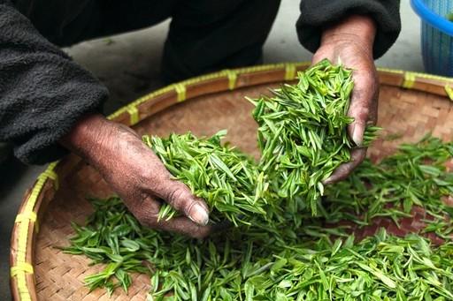 茶葉放越久越值錢嗎?任何茶都適合陳年嗎?